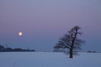 2017_05_lieblingsbaum_winter_schnee_mond_rohlfshagen_0043