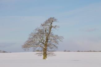 2018_02_Lieblingsbaum_Winter_Schnee_Rohlfshagen_0027