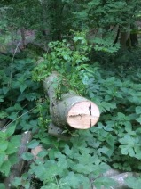 Waldgeschichten Baum