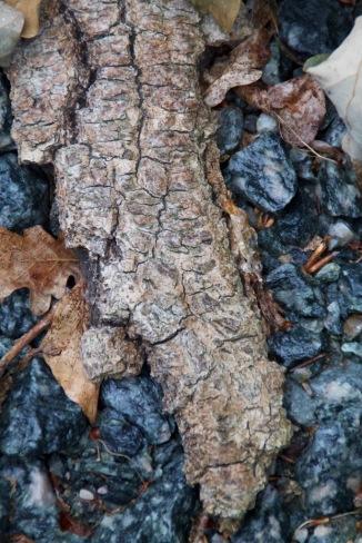Holz Krokodil