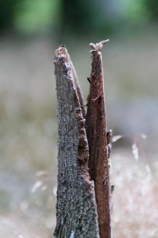 Holz mit dem Aussehen eines Krokodils