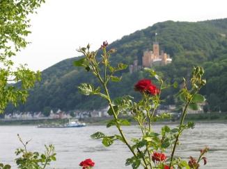 Rosen_am_Rhein
