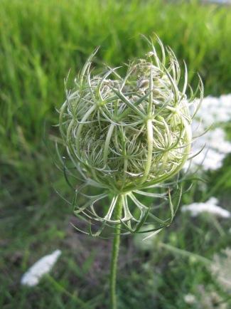 Pflanzen Nest