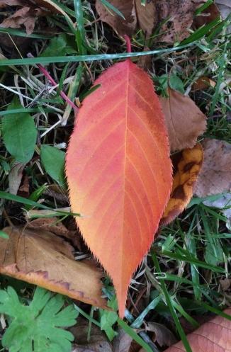 Rotes Blatt auf Herbst