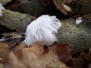 Haareis auf einem Totholz im Holzlager