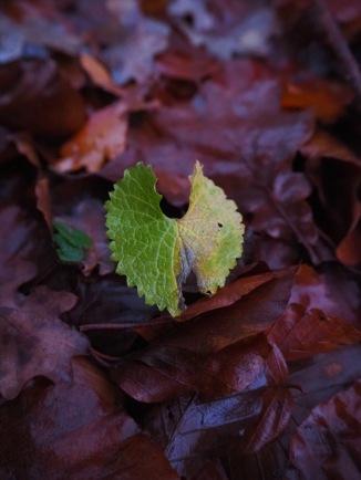 Blatt auf Waldlaubboden