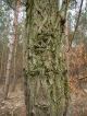 Urwüchsiger Baum