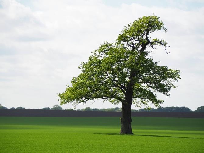 Lieblingsbaum im Frühjahr