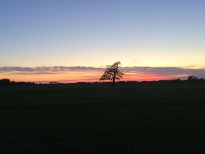 Lieblingsbaum am Abend