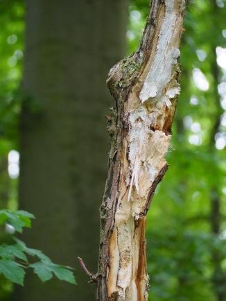 Halber Baum im Wald