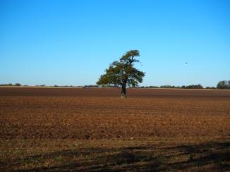 Lieblingsbaum im Herbst