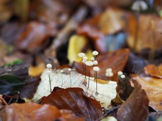 Kleine Pilze auf Blatt