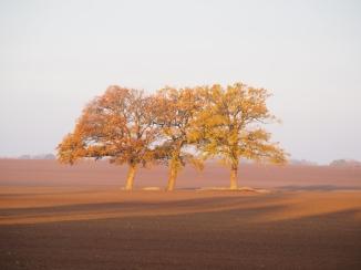 Die drei Grazien bei Sonnenaufgang im Herbst