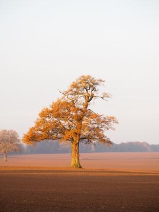 Lieblingsbaum bei Sonnenaufgang im Herbst