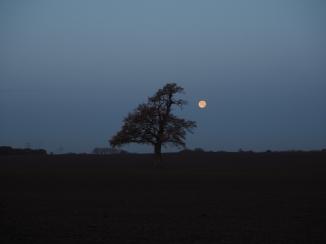 Lieblingsbaum am Morgen mit Vollmond