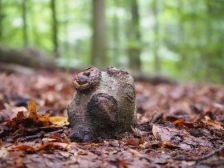Mini Baumstumpf