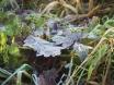 Morgenfrost auf Blätter zu Winterbeginn