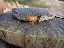 Im Brennholzlager
