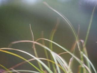 Gras auf dem Balkon