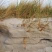 Strandverwehungen Dierhagen, Fischland-Darß