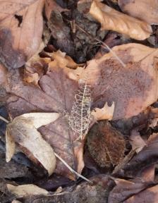 Blattgerippe auf Waldboden