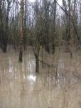 Sturmfolgen - Überflutung des Waldgebietes