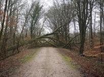 Sturmfolgen - Baumsturz