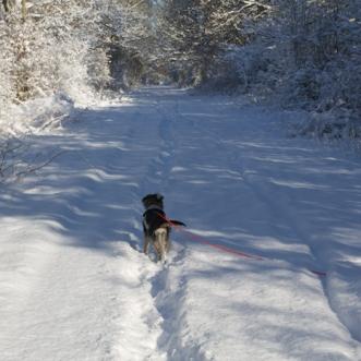 Hundeglück im Schnee 2018