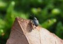 Ein Rüsselkäfer auf einem Blatt