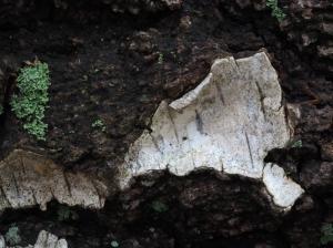 Birkenrinden Plättchen