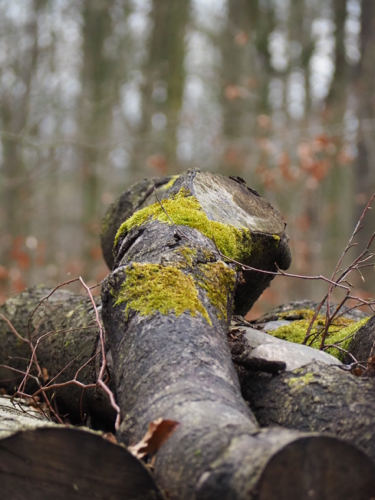 Moosbewachsene Baumrinde im Wald