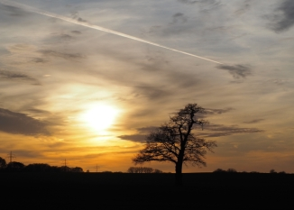 Lieblingsbaum beim Sonnenuntergang
