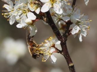 Kopfüber im Pollenbad