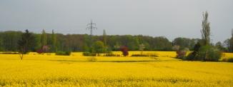 Rapsfeld Panorama mit Farbklecksen