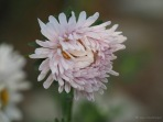 Blütentraum in zartem Pastell
