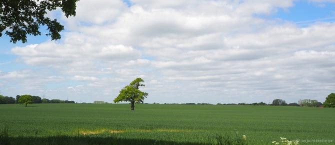 Die Liebe zum Baum - Mein Lieblingsbaum