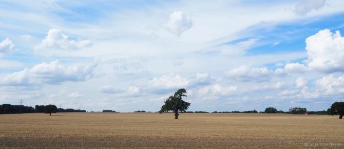 Die Liebe zum Baum - Mein Lieblingsbaum im August 2020