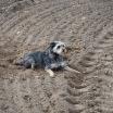 Hund im Glück