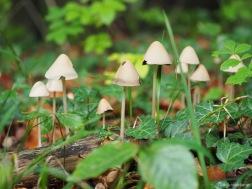 Pilzliche Herbstlandschaft mit Efeu