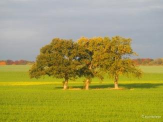 Die drei Grazien zu Herbstbeginn
