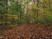 Herbstwaldbodenbaden