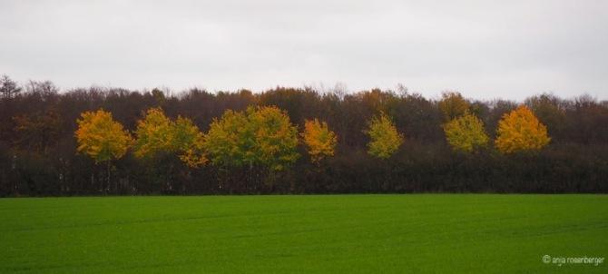 Herbstfärbung im Knick zwischen den Ackern