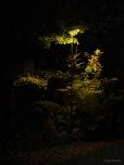 Nächtliche Baumbeleuchtung