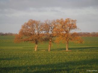 Die drei Grazien im Herbstkleid