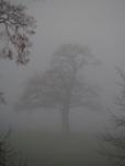 Lieblingsbaum im morgendlichen Nebel