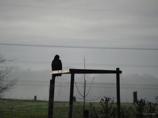 Greifvogel am Morgen