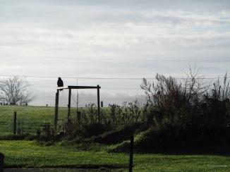 Greifvogel-Szenario am Morgen