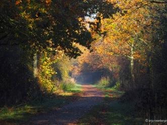 Einladendes Herbstlicht auf der Bahntrasse