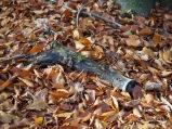 An diesem Stück Totholz auf de Waldboden habe ich sie entdeckt