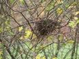 Herbstliches Vogelnest